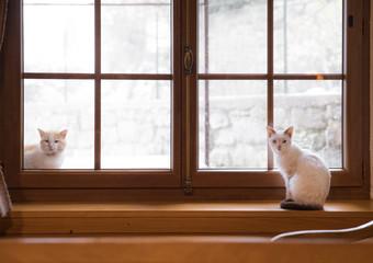 内窓の現地調査の方法